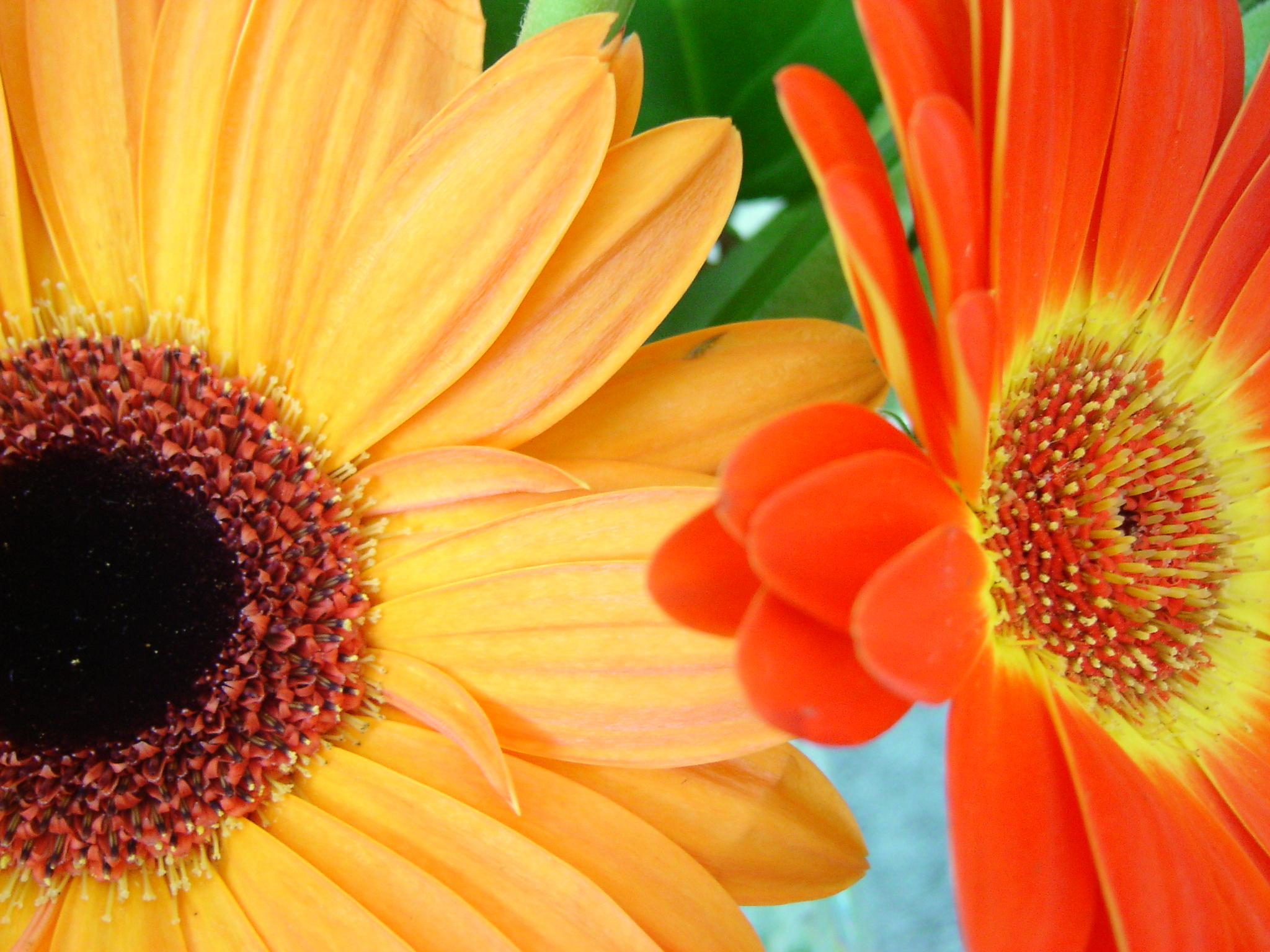 Fun colander flower arrangement