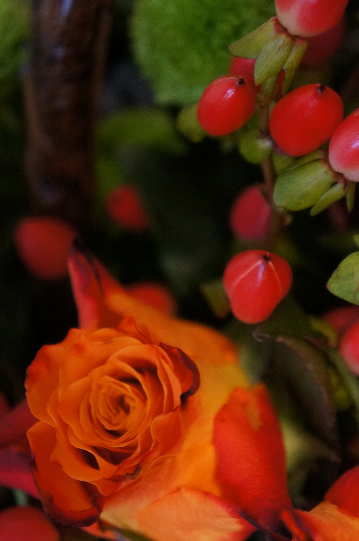 Roses in autumn arrangements