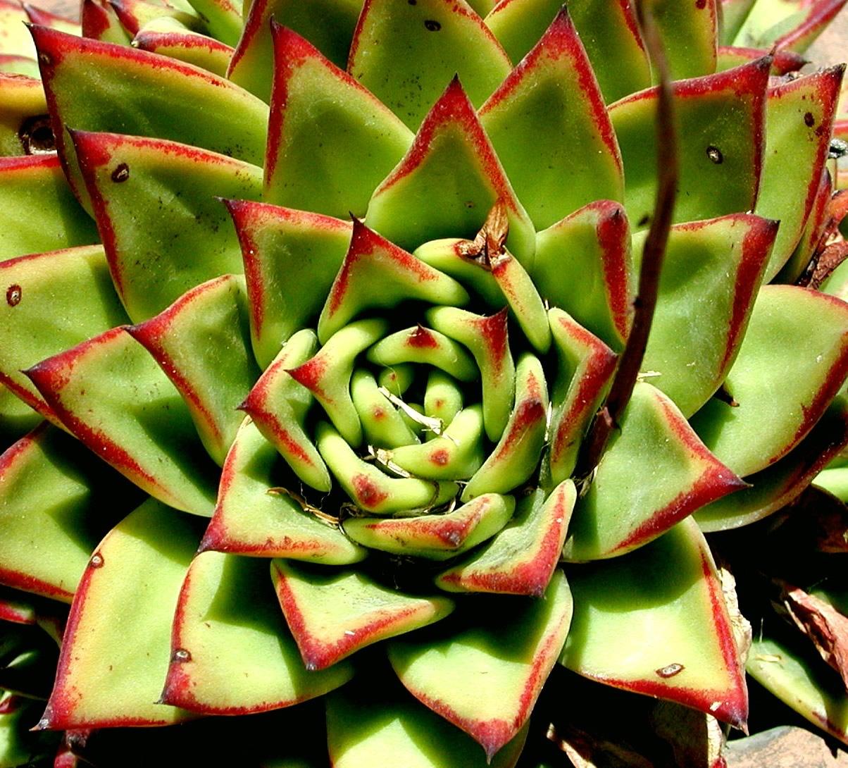 Beautiful succulent varieties