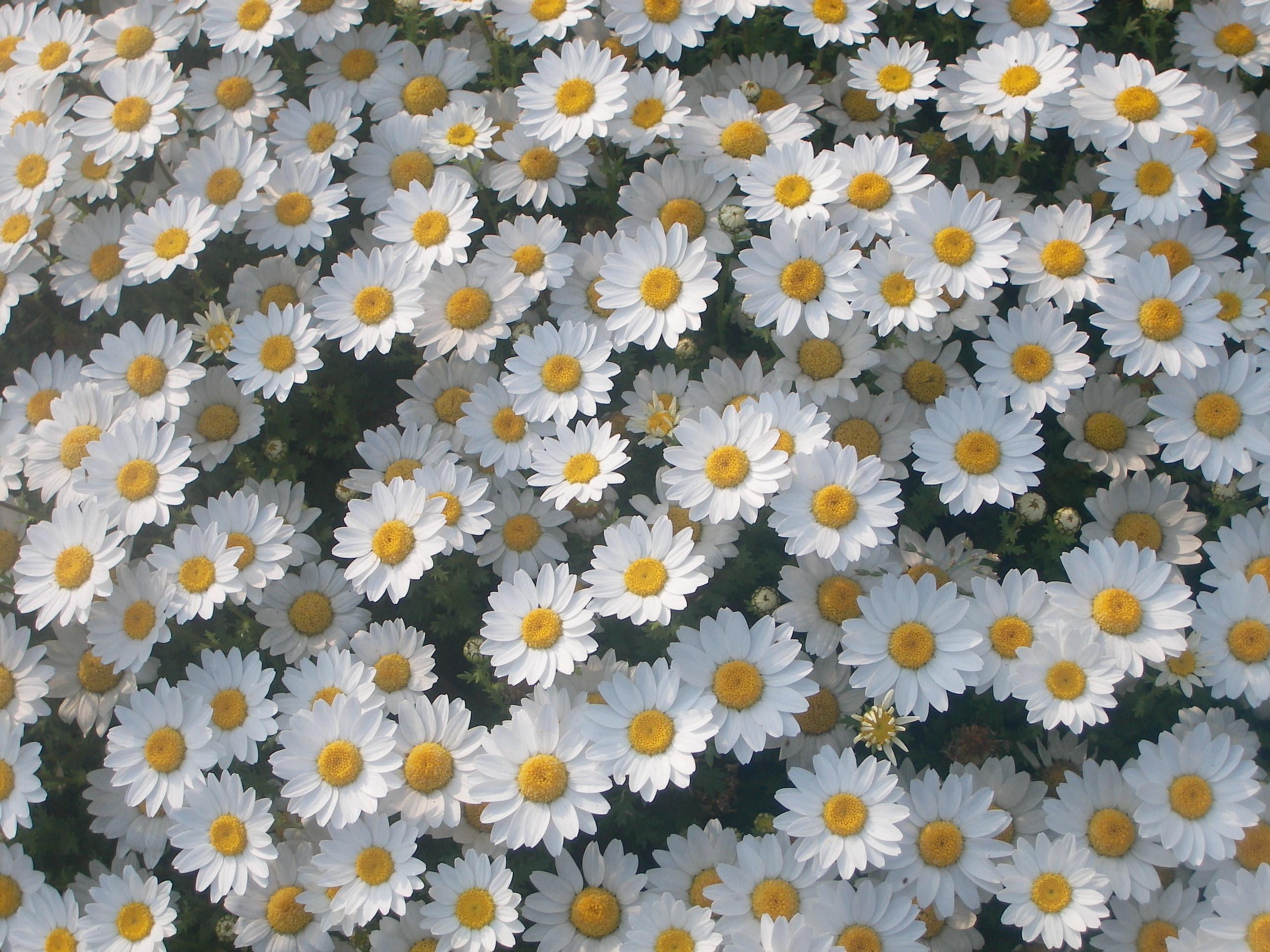 Wonderful white flowers - Flower Press