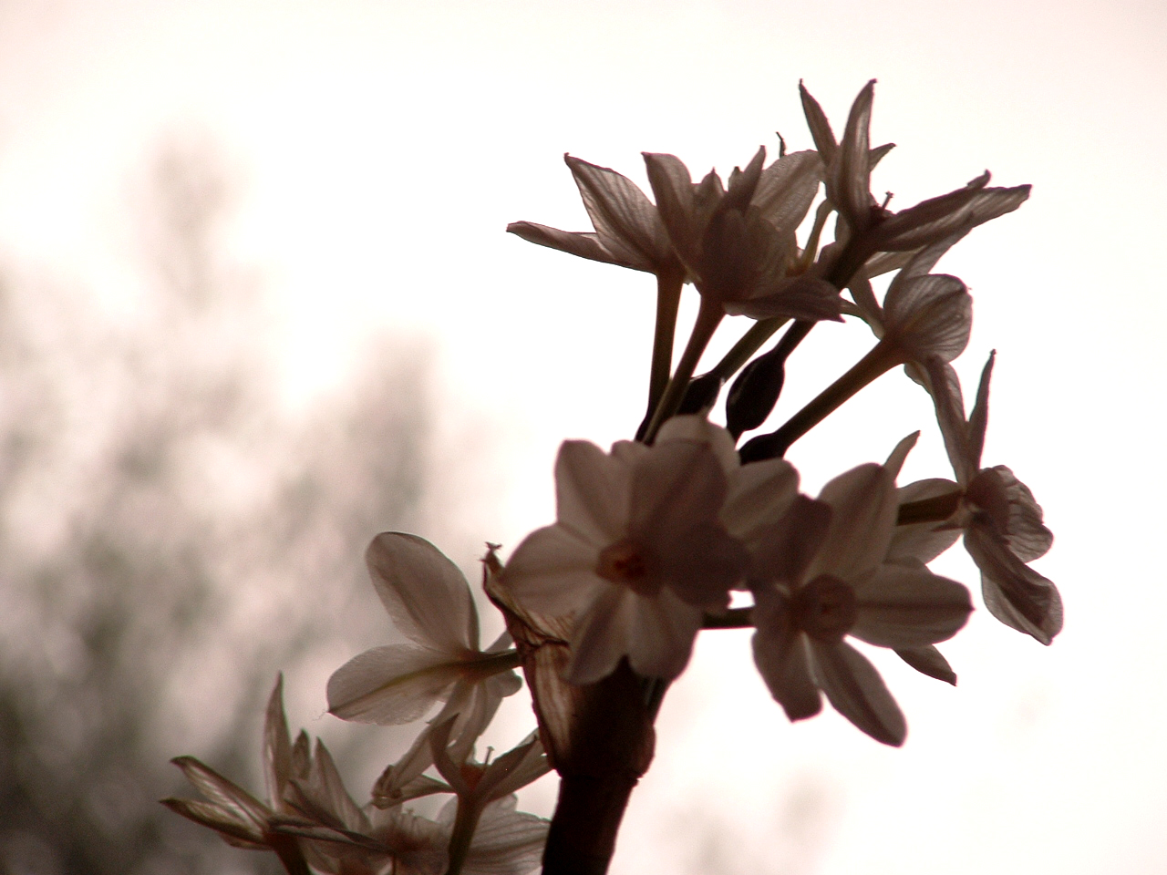 Wonderful winter flowers