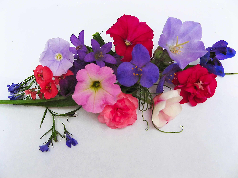 A world full of fabulous flowers