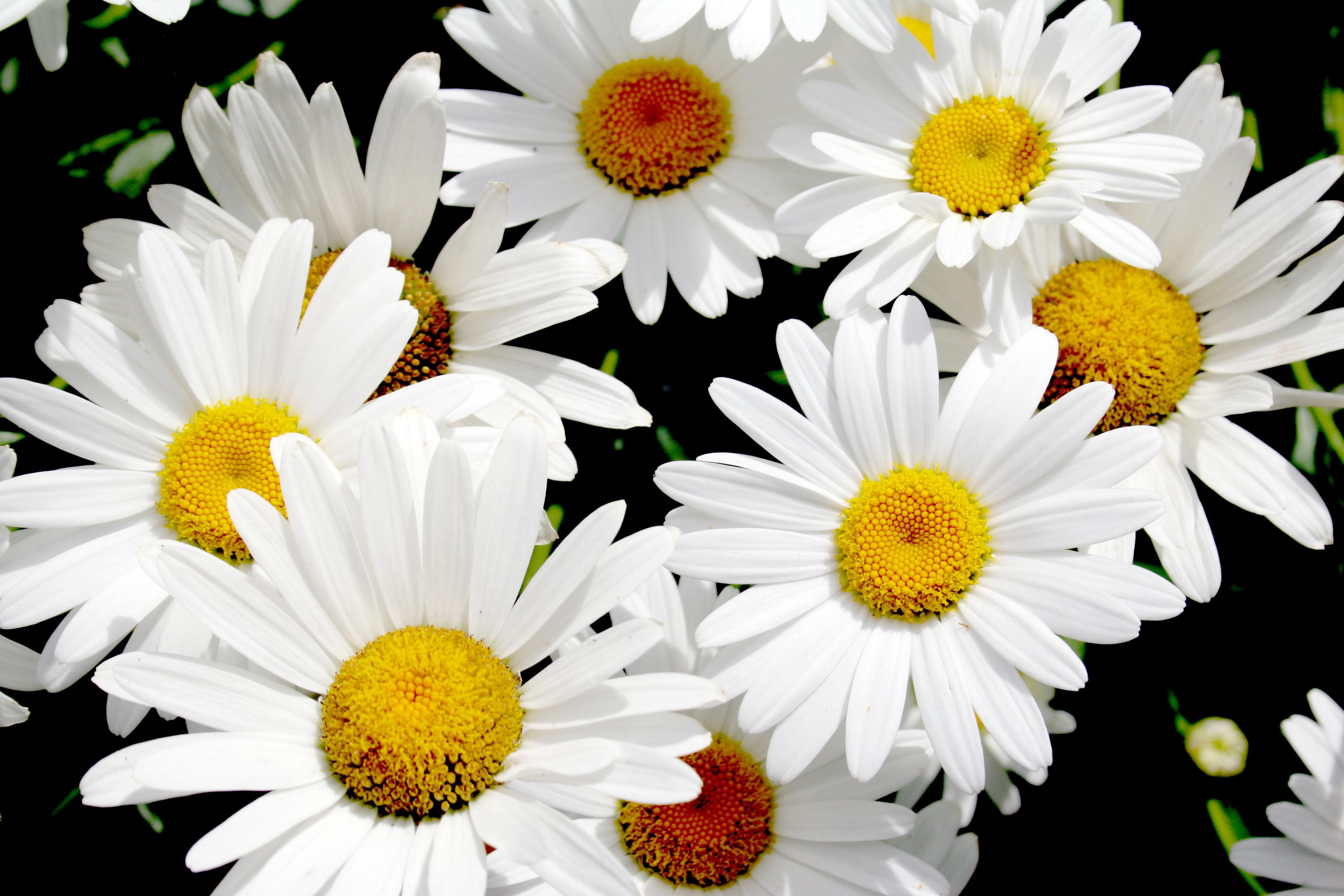 Popular white blooms