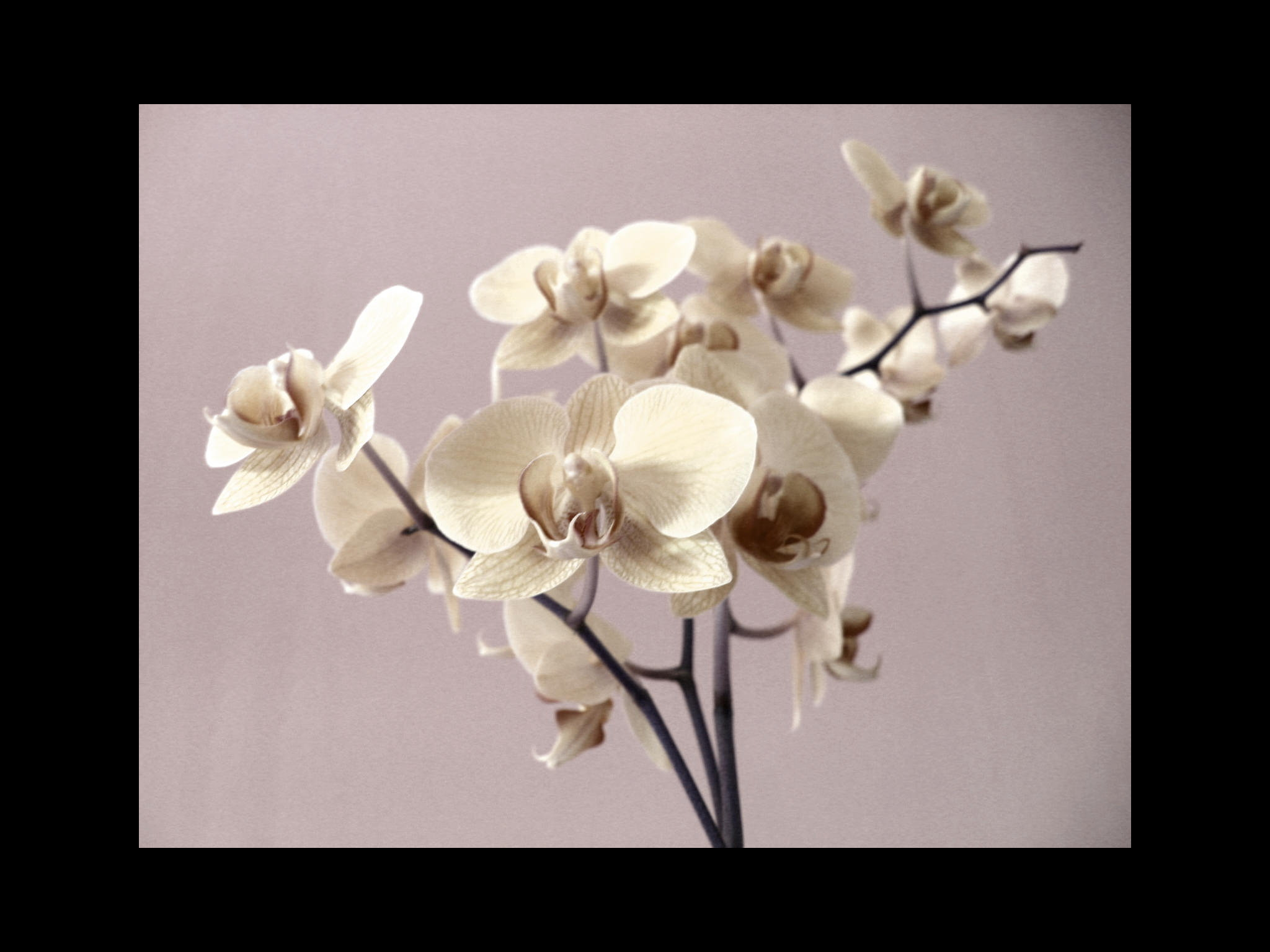 Types of orchids