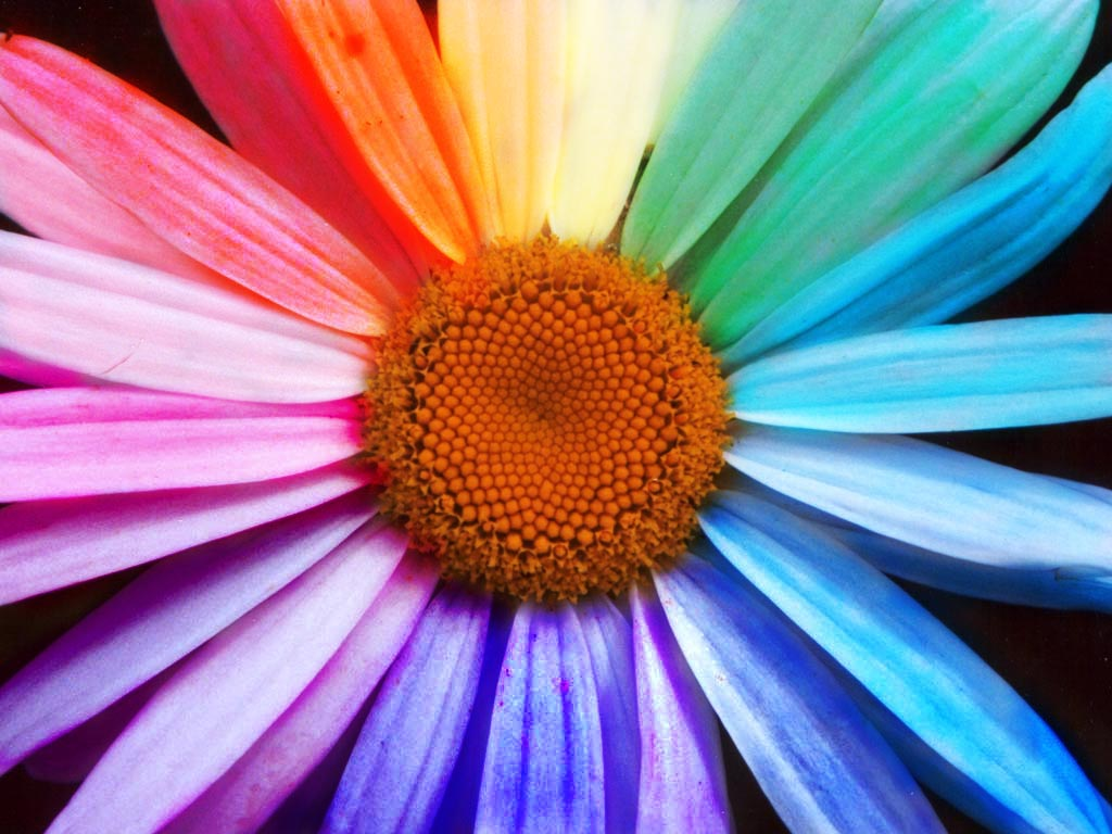 Get creative with flower colours