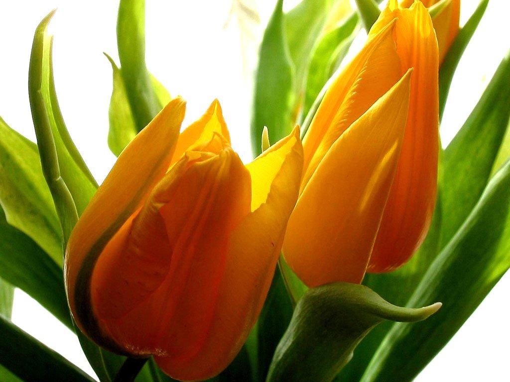 Flowers for teacher