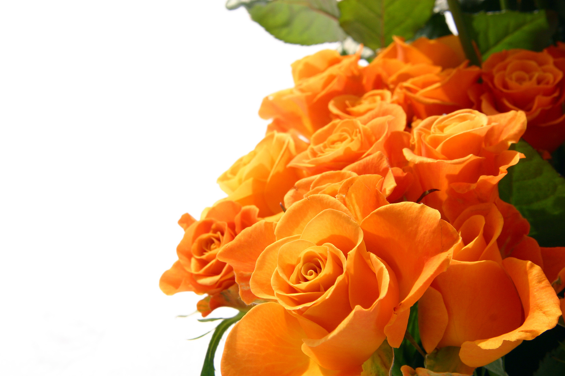 Keep flowers fresh overnight for delivery