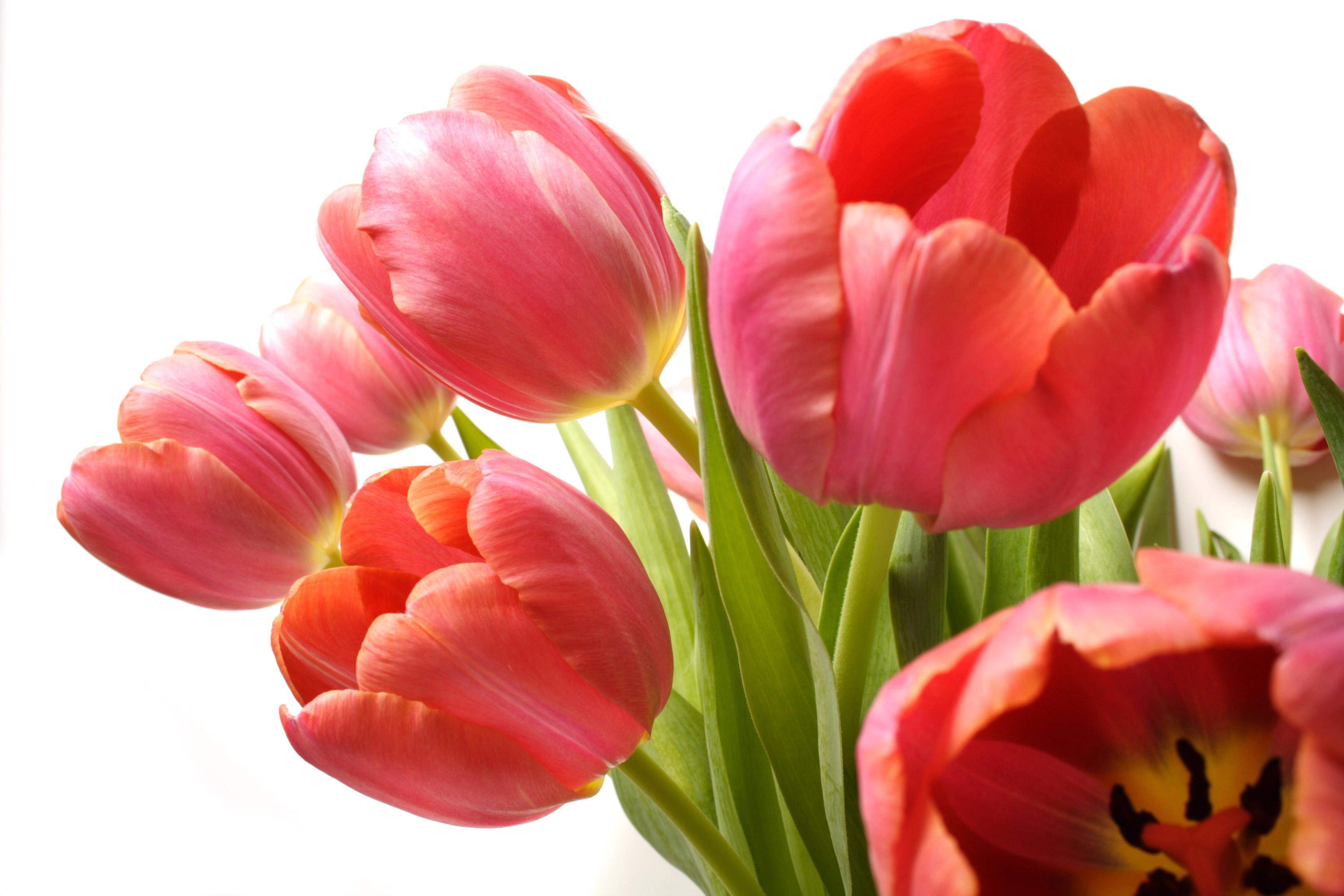Choosing between online florists