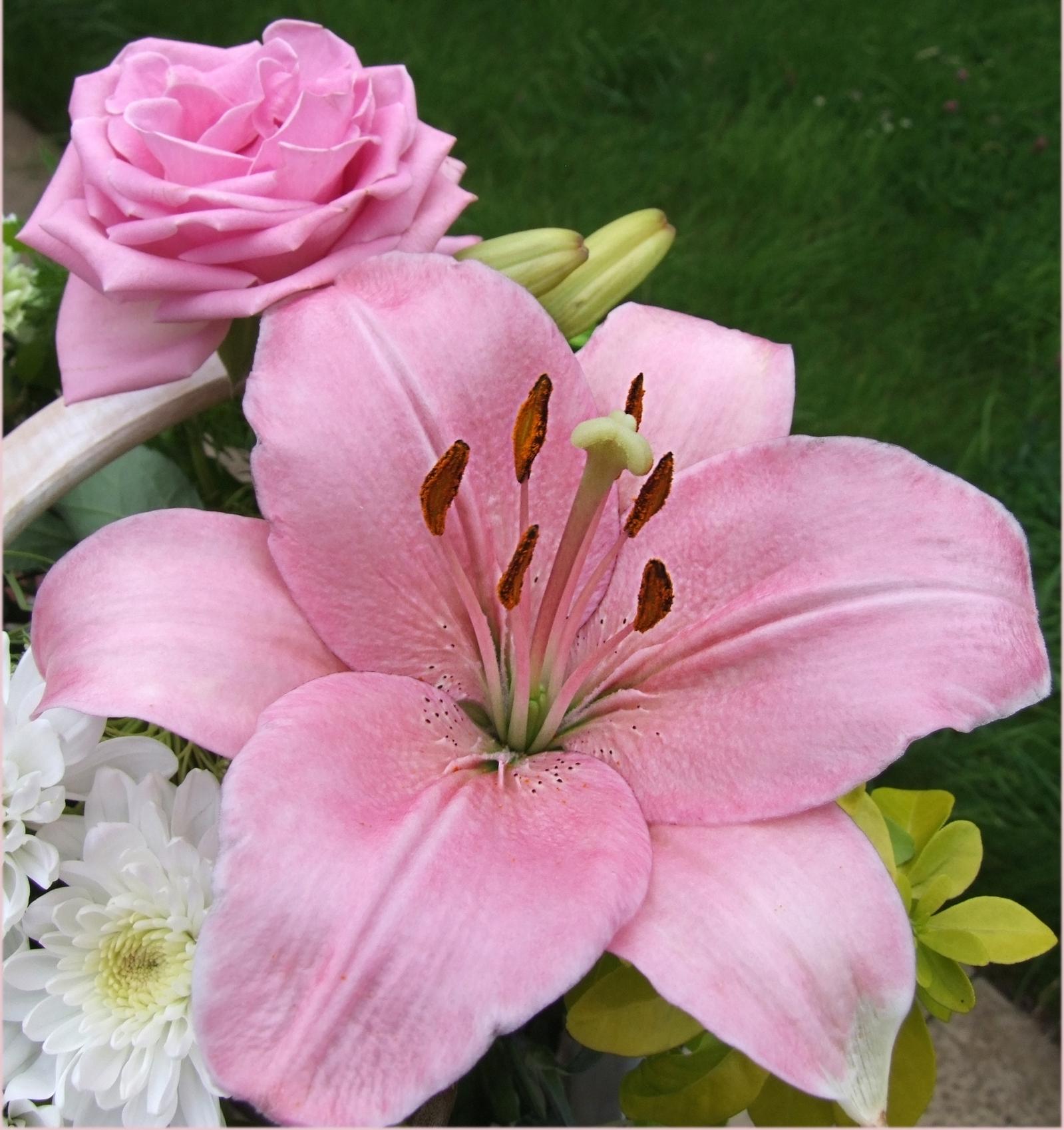 Popular pink blooms