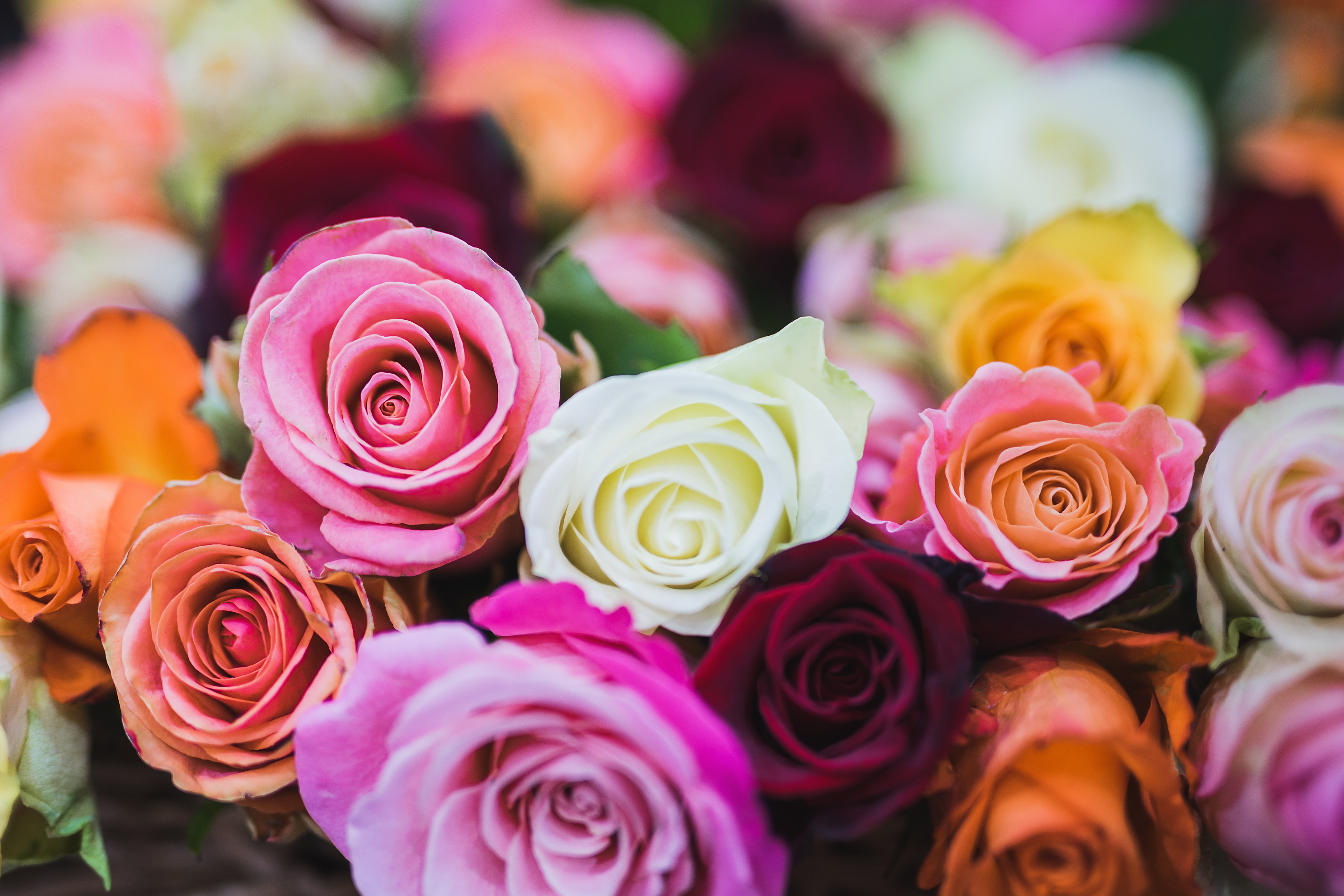 Make your own mixed rose bouquets