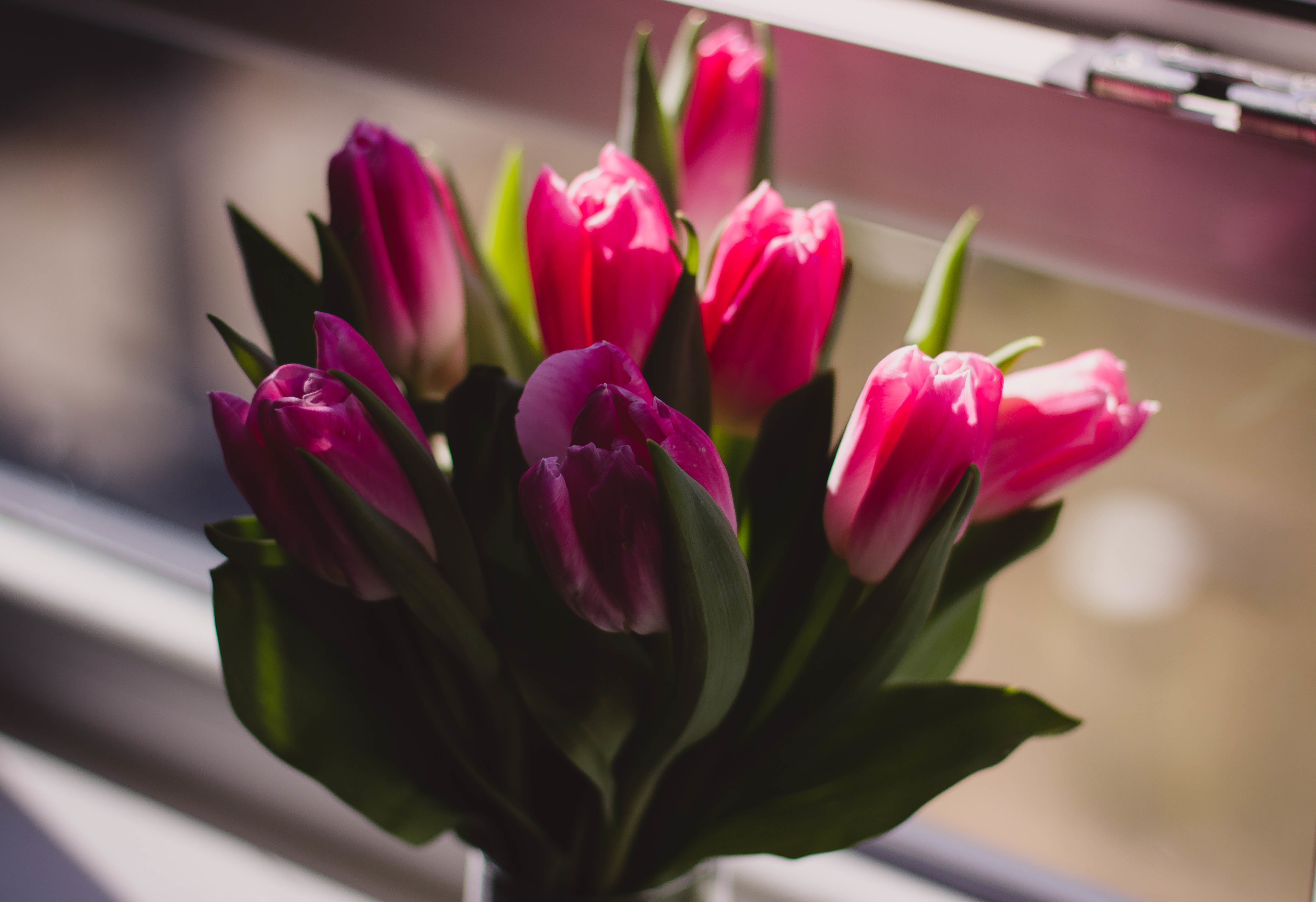 Flowers to keep your home bright after Christmas