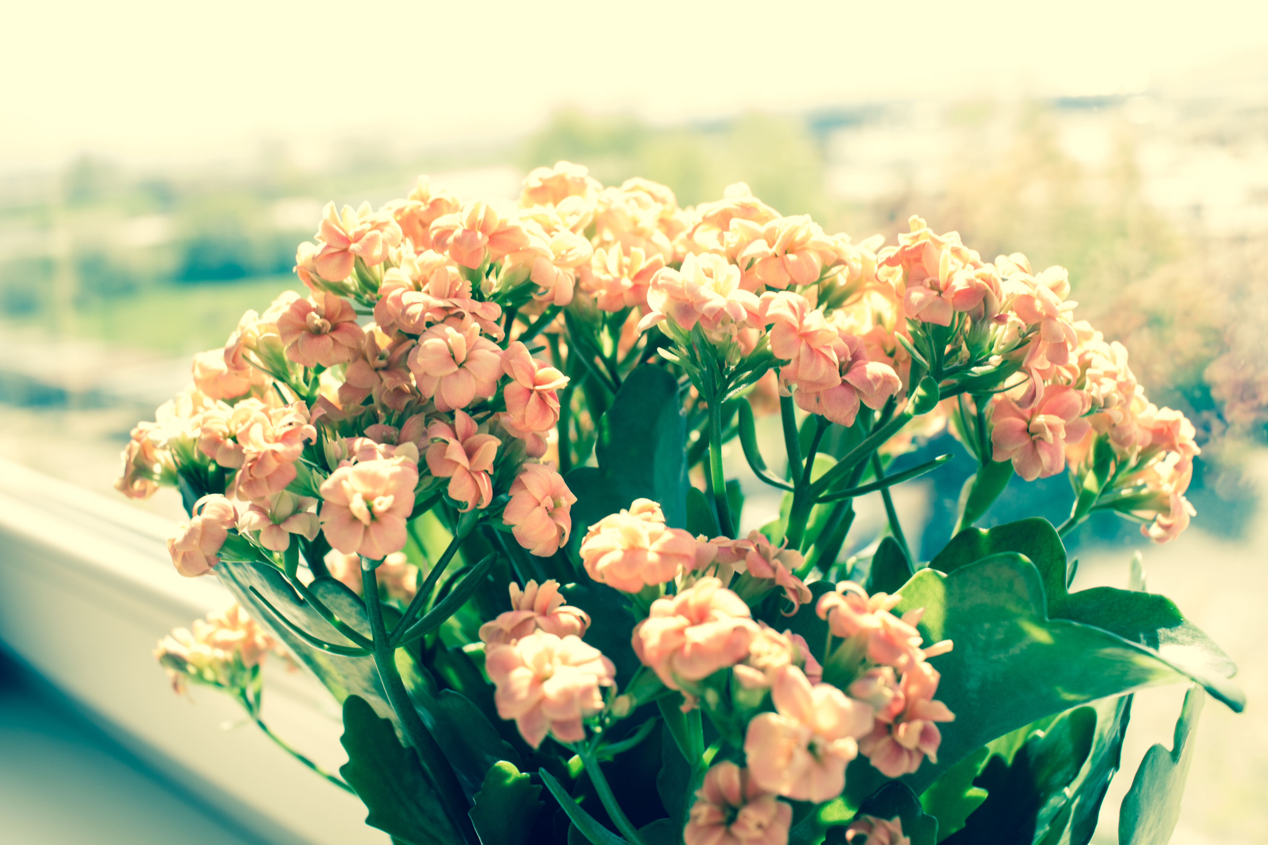 Why you need fresh flowers in your home