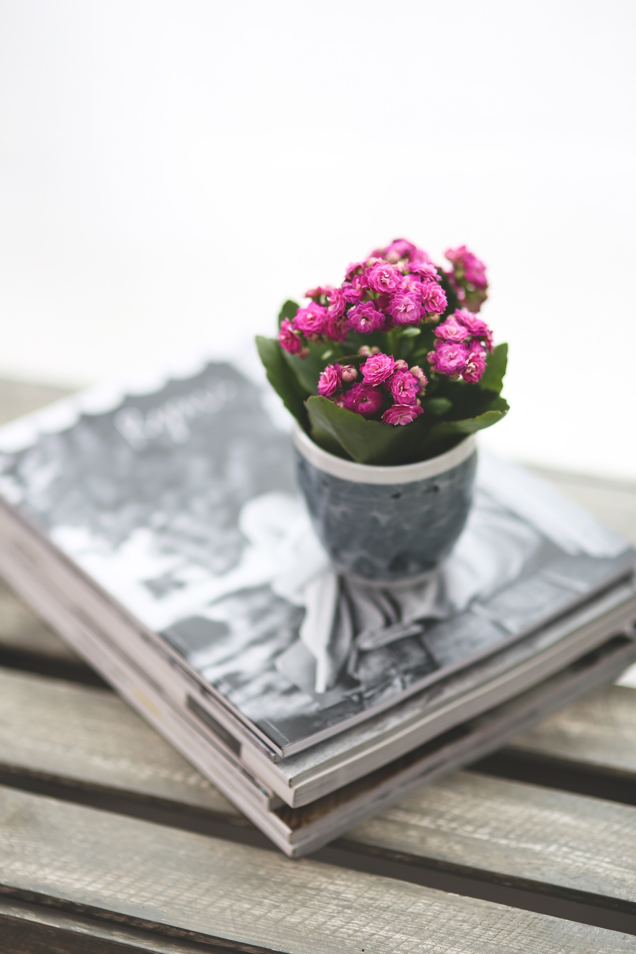 Add colour with the right house plants