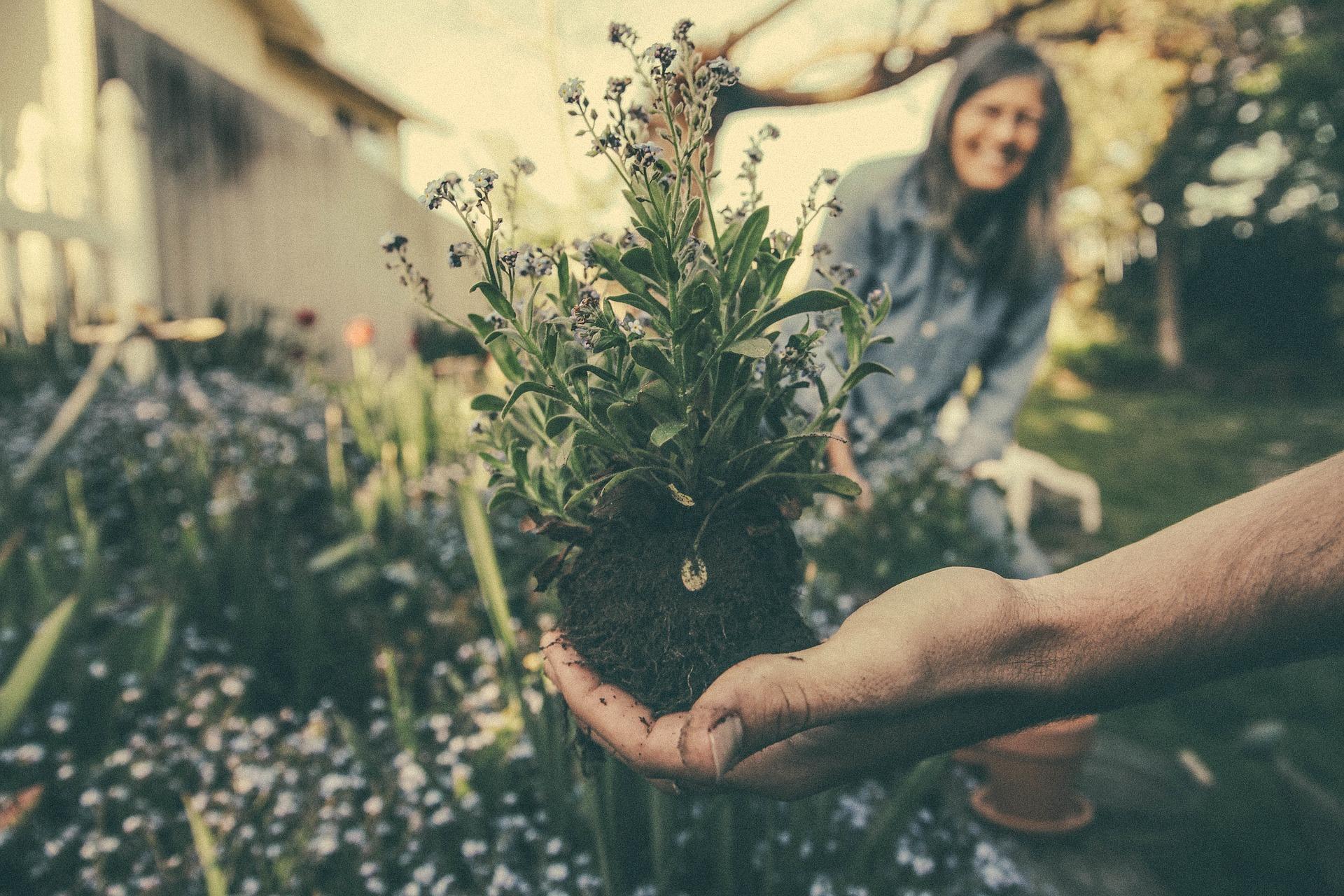 Spring flower planting advice