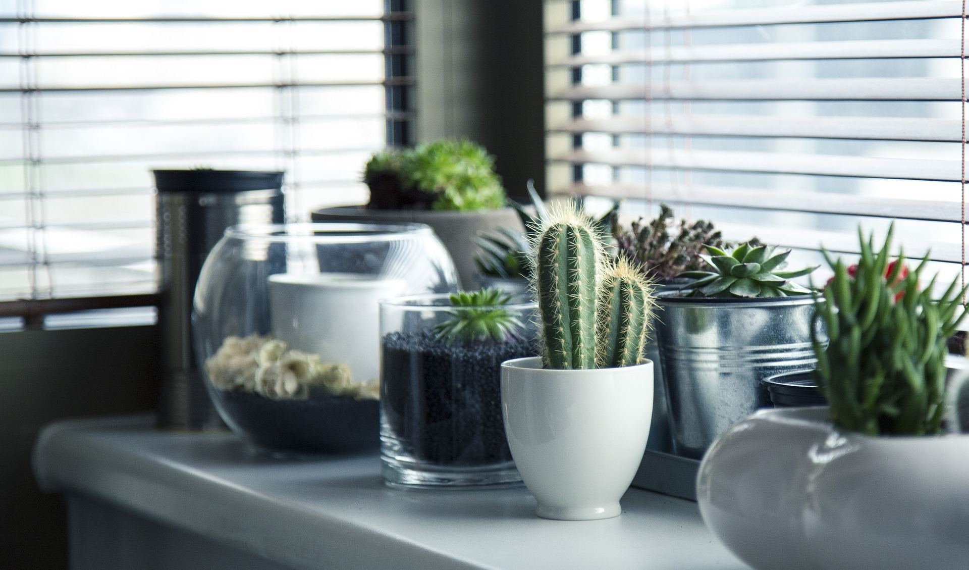 Substituting tradition with succulents