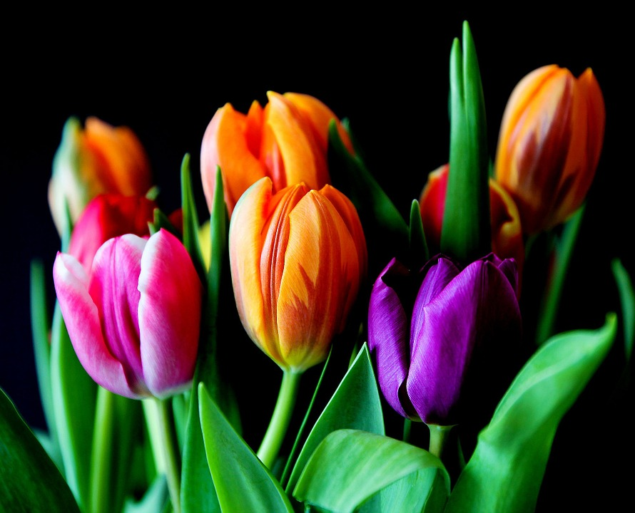 Tulips for your spring bouquet