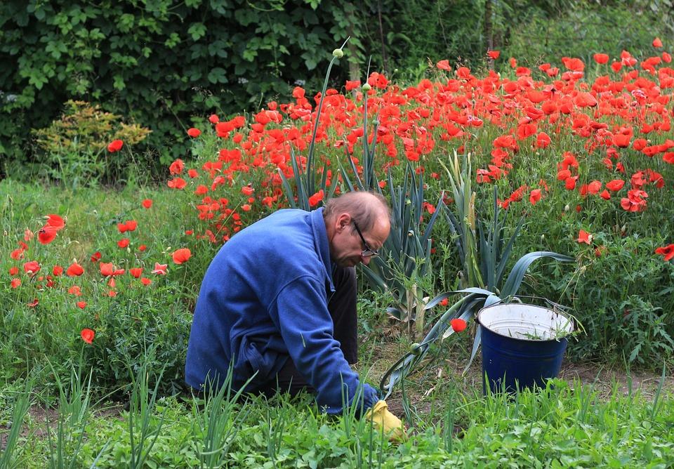 Tips for easy weeding