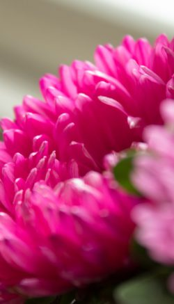 Monochromatic flower designs
