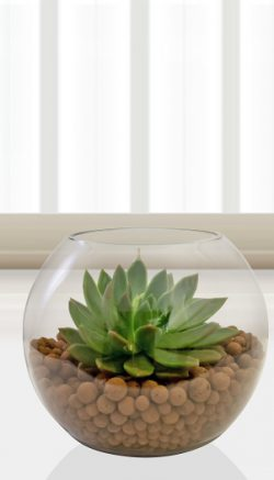 Terrarium care advice