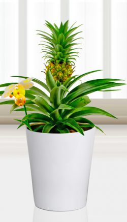 Desk plants for your office