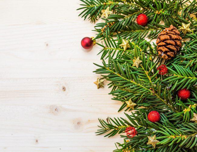Christmas tree care tips