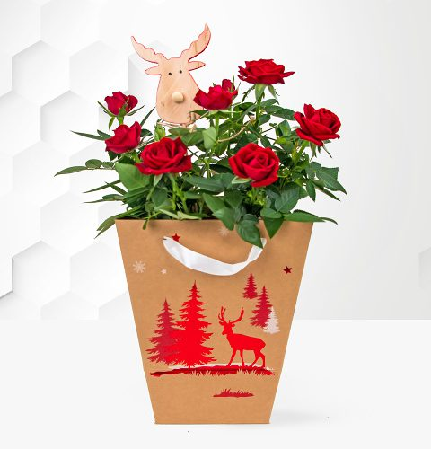 Christmas flowers for your office