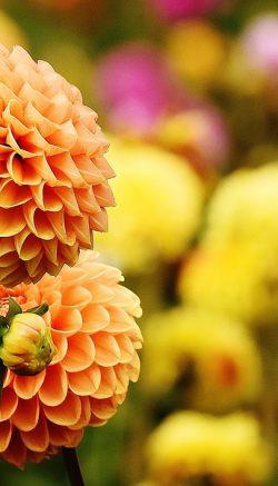 Autumn garden care