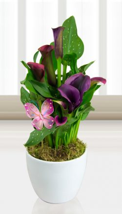 Tropical plant care