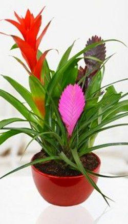 Revive plants