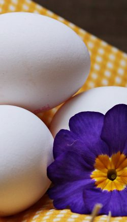 Pressed flowers for egg decor