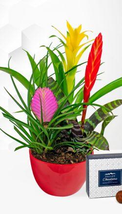 Bromeliads plant care