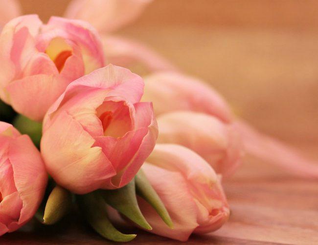 Tulip arranging