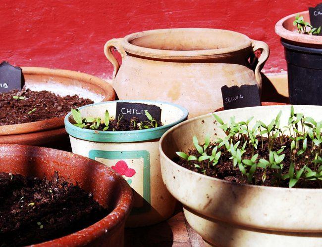 Redecorate planters