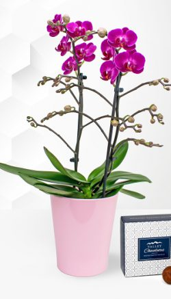 orchid colour meanings