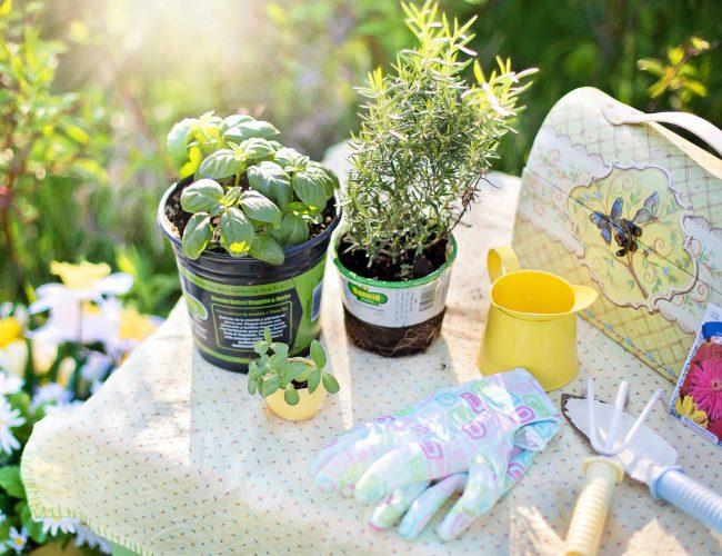 Herb garden advice