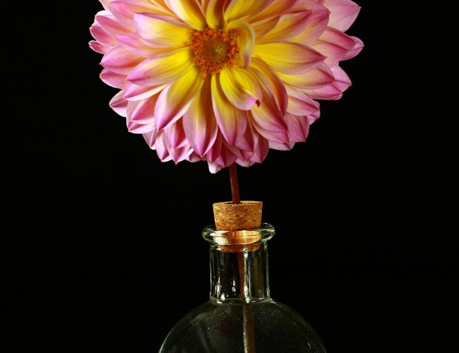 Bud flower arrangement