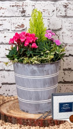Potted plant tips