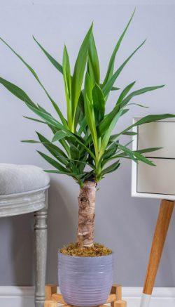 Plant care advice